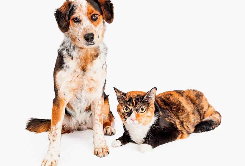 Mudanças-no-comportamento-de-seu-animal