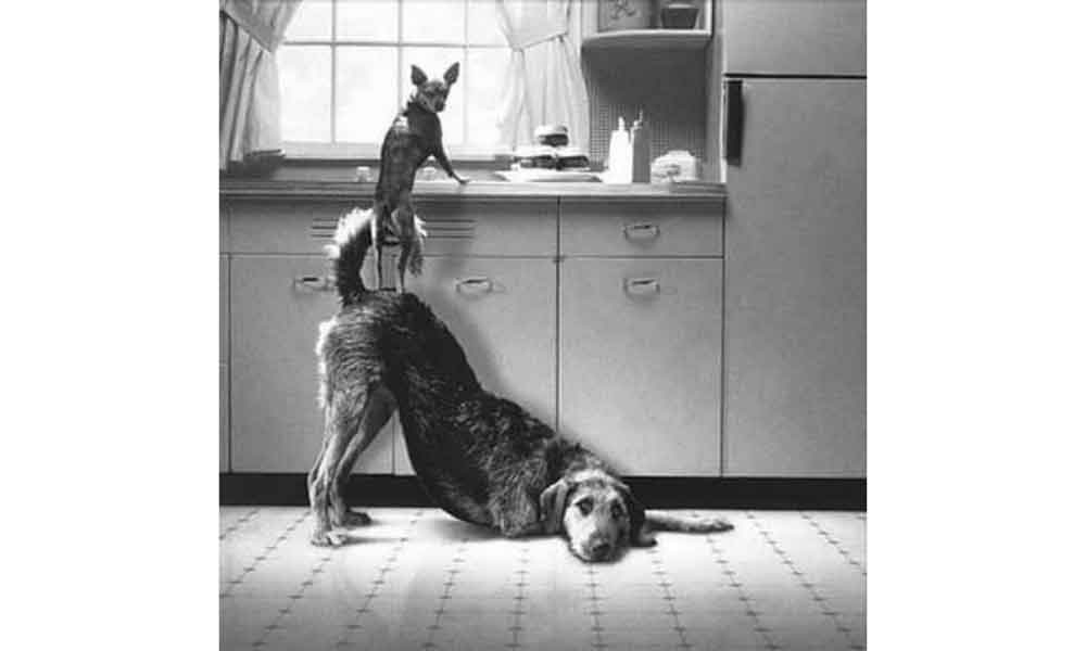 Idéias-que-facilitam-o-dia-a-dia-dos-animais