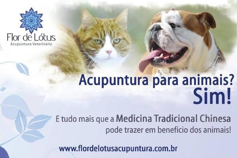 Acupuntura-Veterinaria-Animais-Animal-Cachorro-cachorros-gato-gatos