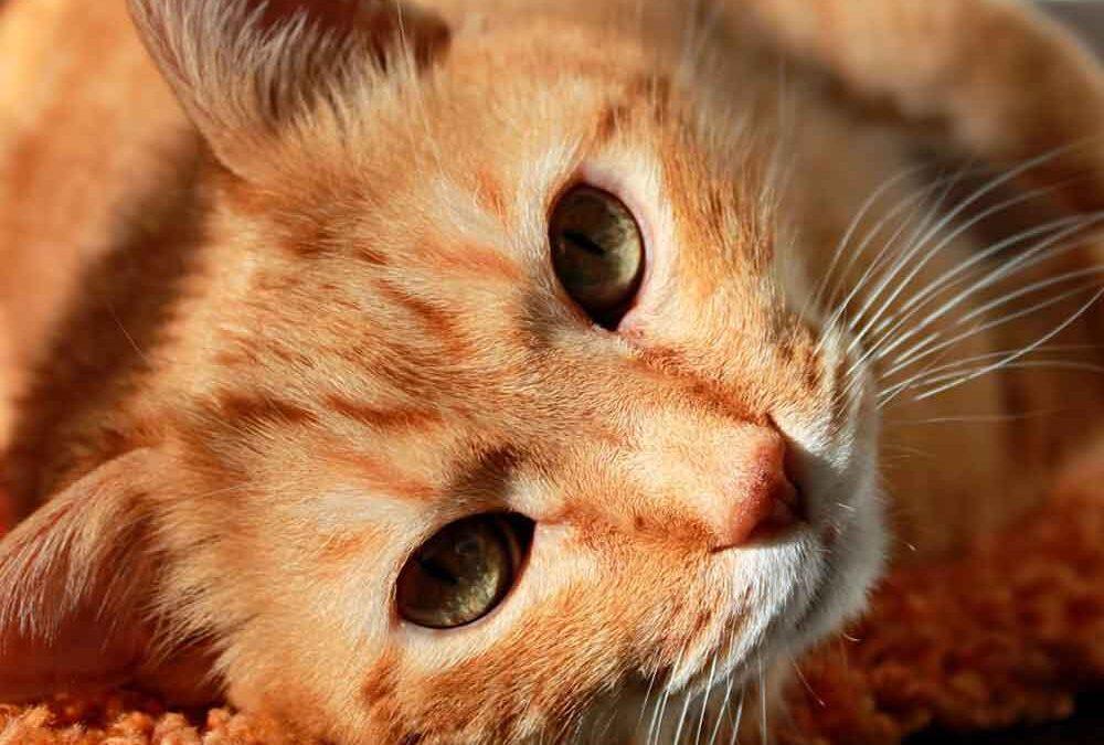 Acupuntura-animal--cuidando-das-sete-vidas