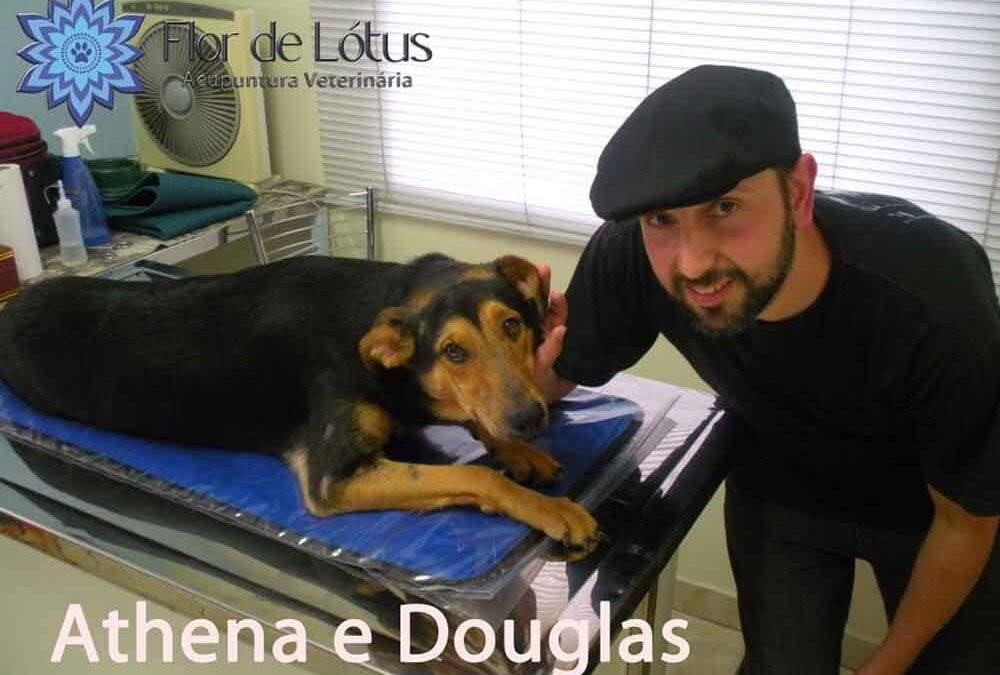 A história da Athena e a clínica veterinária Flor de Lótus
