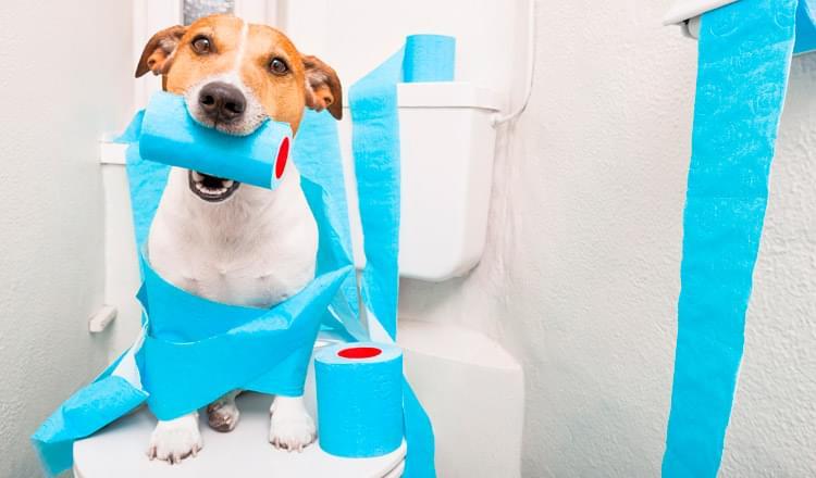 Alterações Urinárias em Animais – Parte II
