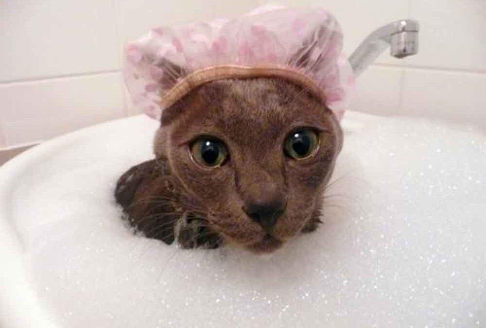 Animal-limpo-=-Animal-saudável