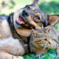 As-ações-dos-gatos-e-dos-cães