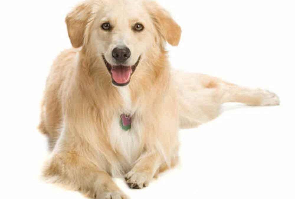 Os-sentidos-sensoriais-dos-cachorros