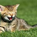 a-felicidade-dos-gatos