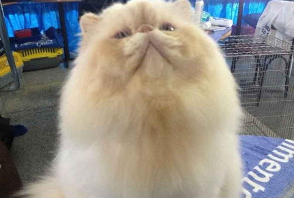 Existe-um-gato-ideal-para-cada-tipo-de-pessoa