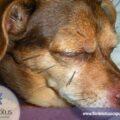 Paciente-Ranny-e-o-tratamento-de-questões-oftalmológicas-veterinárias