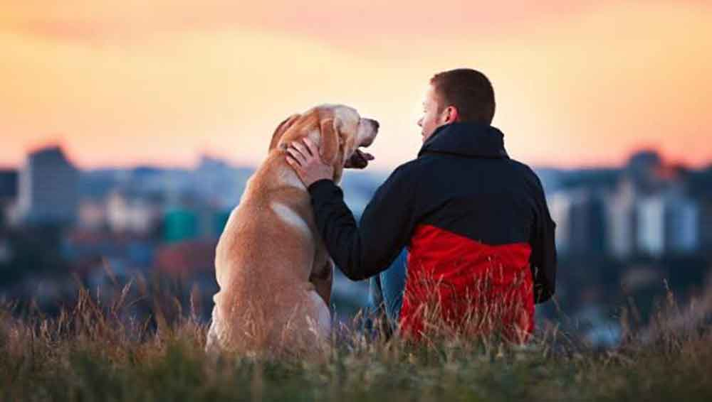 os-cães-ajudam-a-melhorar-a-saúde-dos-donos