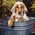A-hora-do-banho-com-os-cachorros