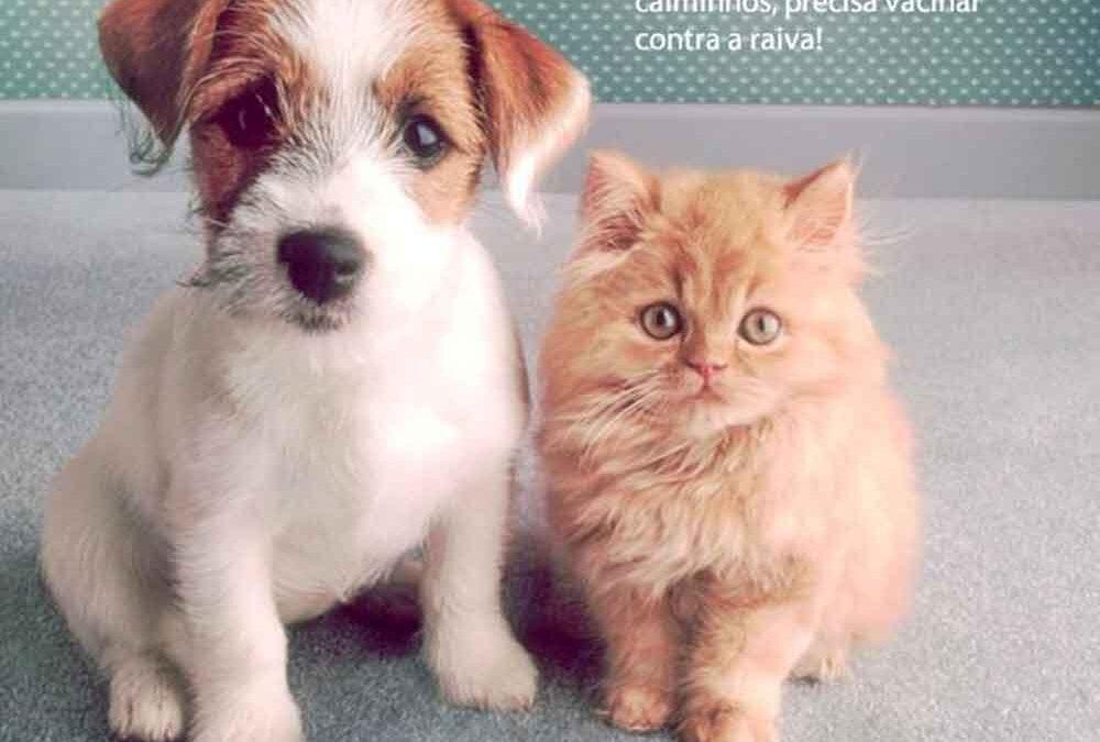 campanha-nacional-de-vacinação-de-cães-e-gatos