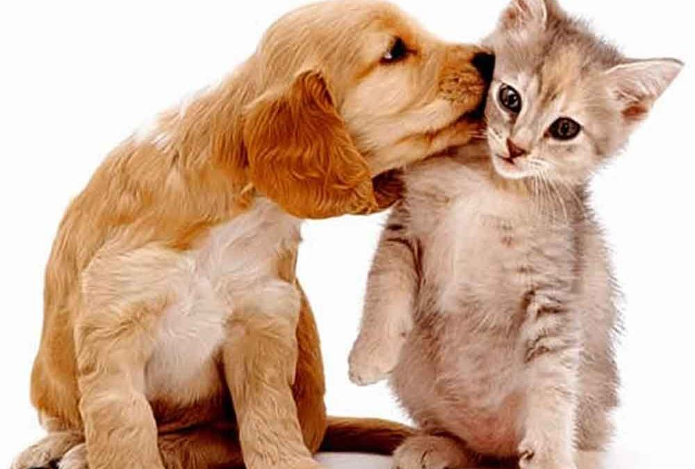 cães-e-gatos-convivendo-na-mesma-casa