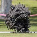 3-raças-curiosas-de-cachorro