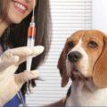 vacinas-obrigatórias-para-cães