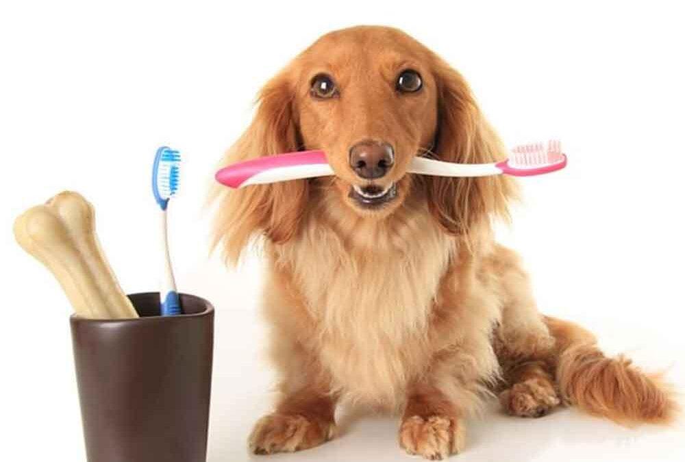cuidados-com-a-dentição-do-seu-melhor-amigo
