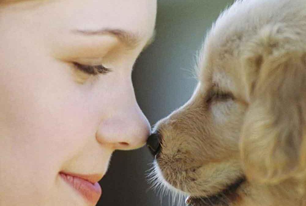 cães-também-são-sensíveis-à-emoções