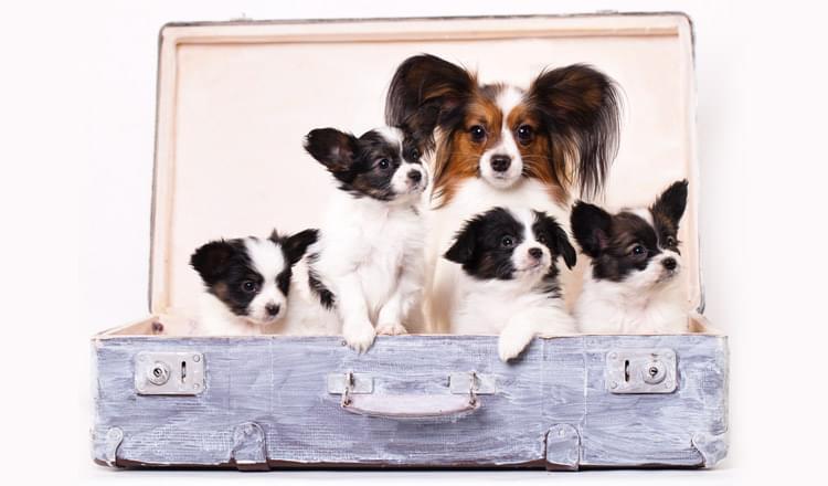 18-curiosidades-sobre-cachorros