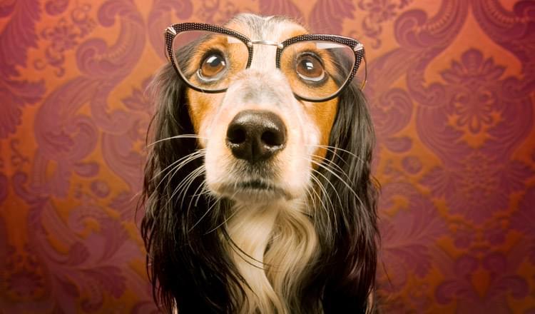Problemas-de-visao-em-cachorros