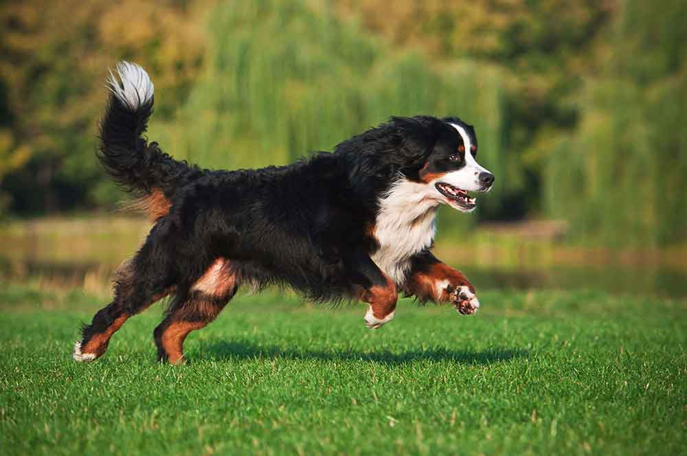 Seu-cão-também-precisa-de-exercícios