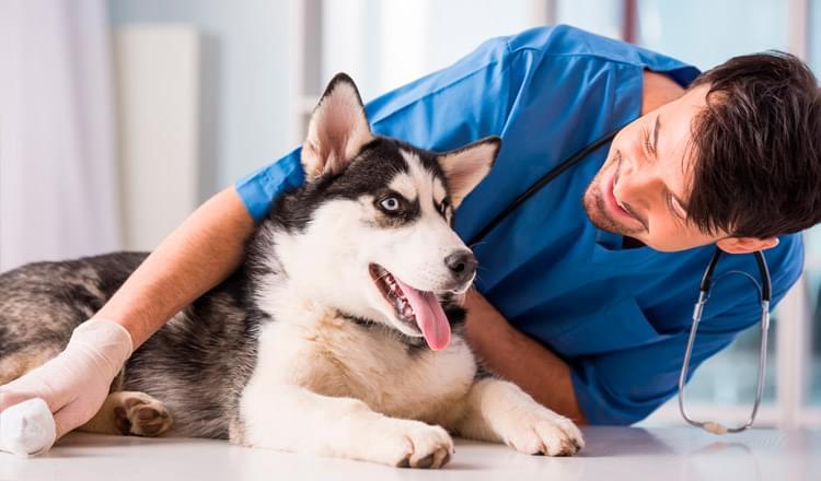 Como-acostumar-seu-cao-a-ir-ao-veterinario