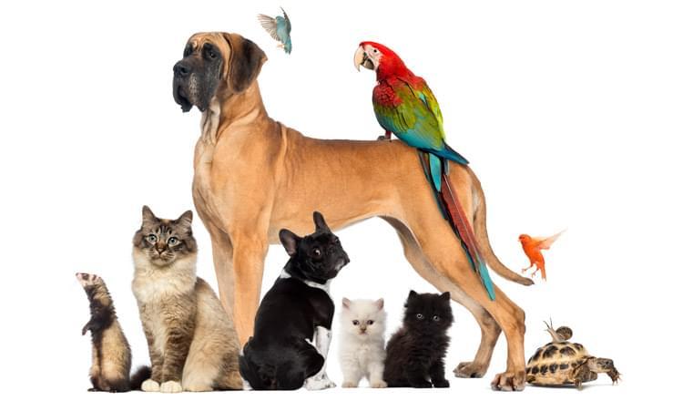 IBGE-fara-censo-sobre-animais-de-estimacao