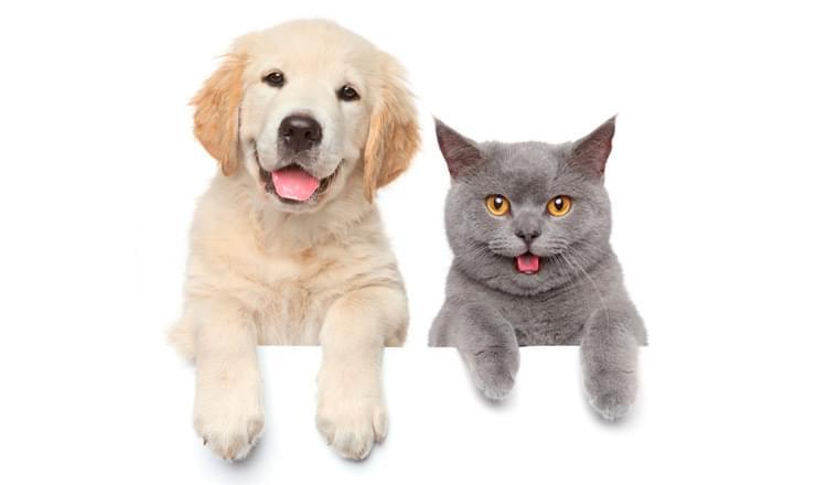Cães ou gatos?