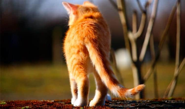 Conheça o mundo dos gatos domésticos