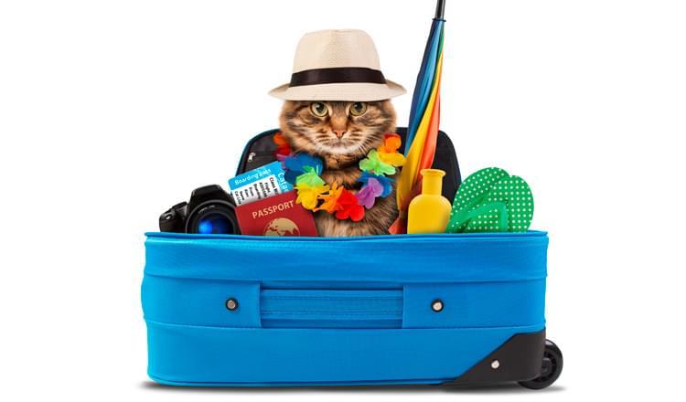 Saiba como transportar seu animal de estimação em viagens de ônibus e avião