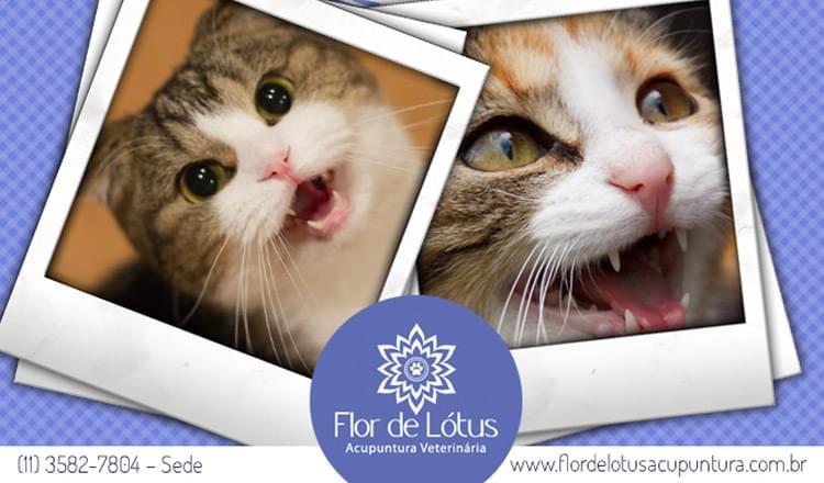 Gatos-que-miam-em-excesso