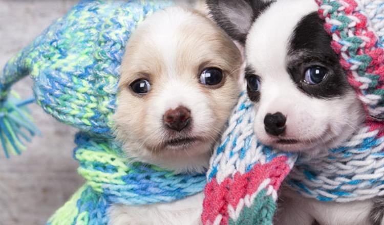 frio-e-os-animais-de-estimacao