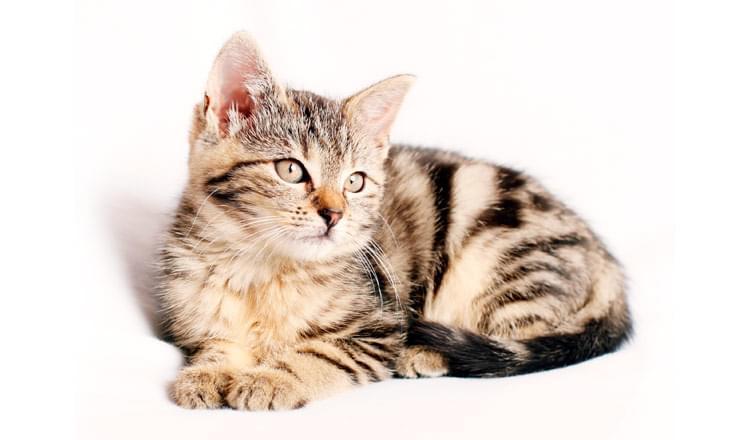 9-Dicas-para-Acalmar-o-seu-Felino