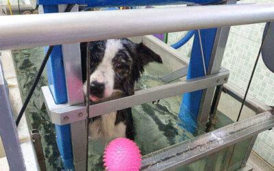 Hidroterapia para animais